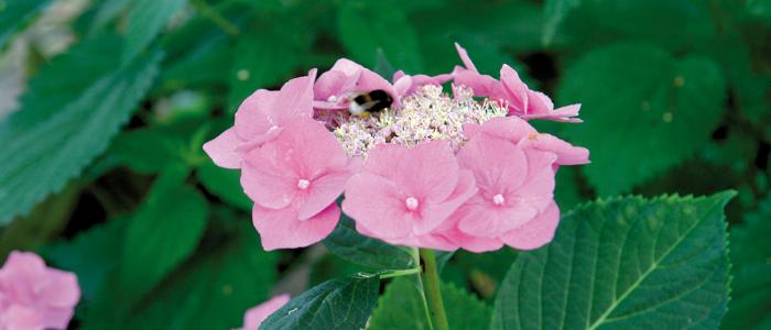 Blütenfreuden Eva Luber