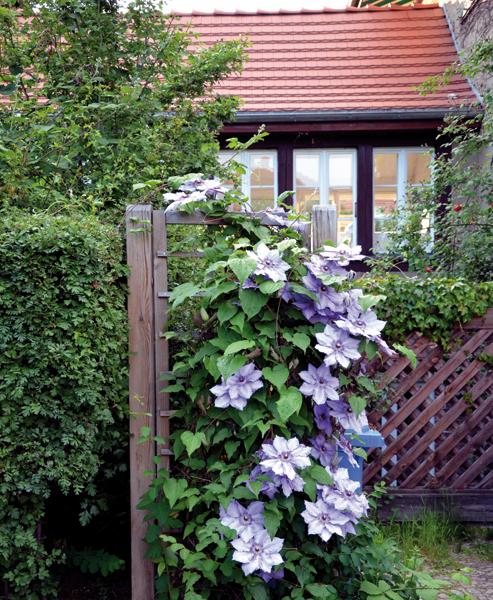 Blumengarten oder Nutzgarten