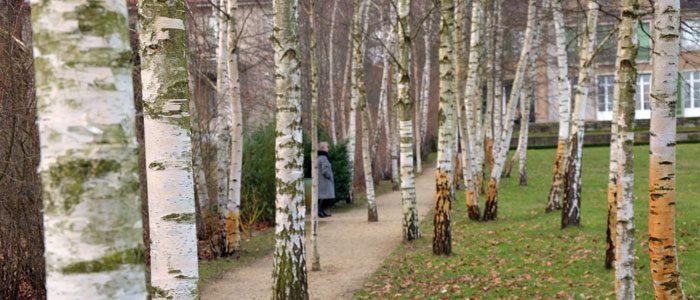 Im Liebermann Garten am Wannsee.