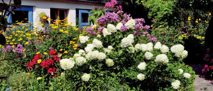 Bilder aus dem Garten von Hannah Höch.