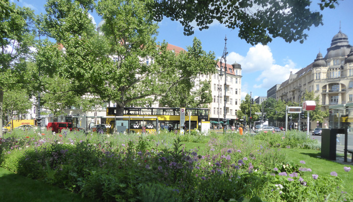 Staudenbeet am Olivaer Platz.
