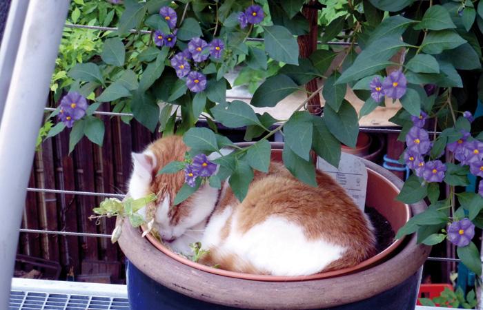 Gartenbeobachtungen