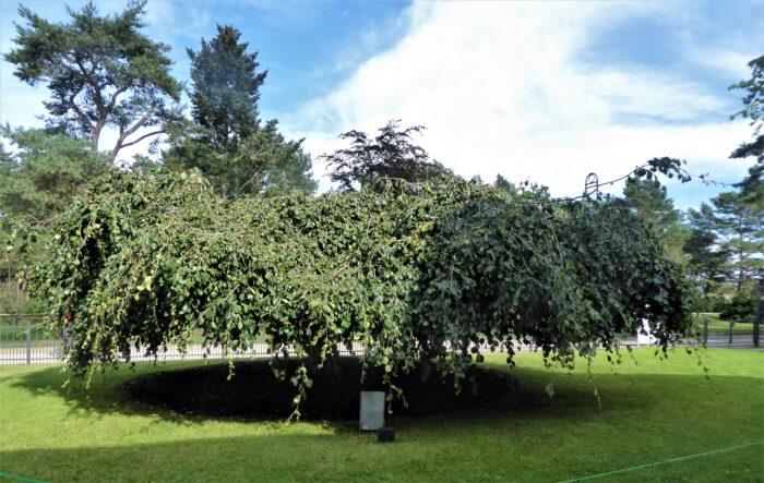 Bäume und Sträucher als Strukturbildner